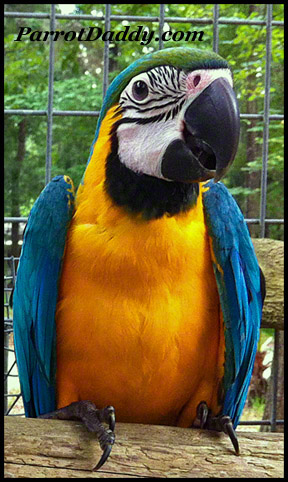 Parrot Babies for sale | Exotic Rare Hybrid Macaws